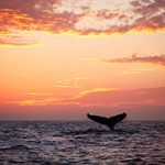 Turks and Caicos Whale Watching Day Trip in Salt Cay
